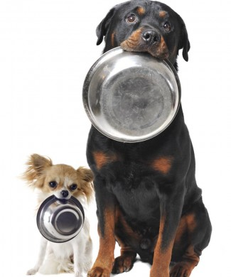 Foto de estudio de mascotas